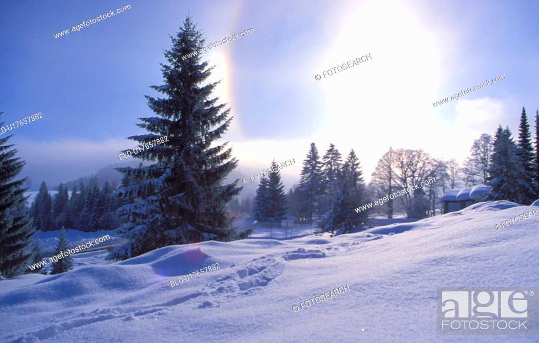 Stock Photo: Winter snow scene.