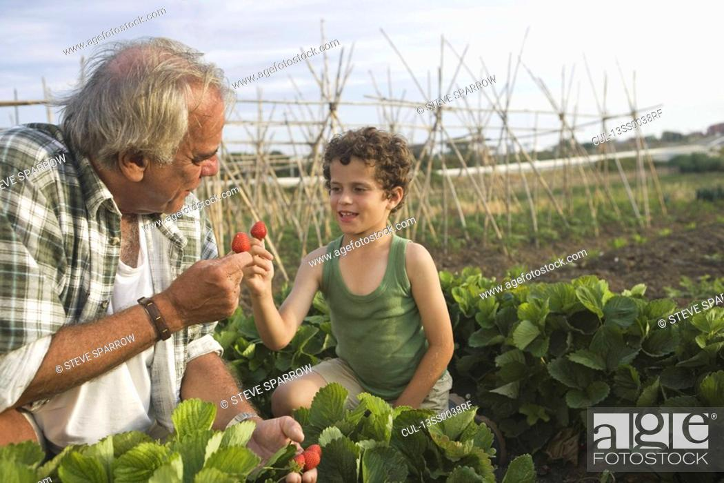 Stock Photo: Grandfather and grandson with strawberry.