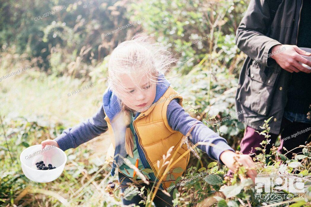 Stock Photo: Girl picking blackberries.