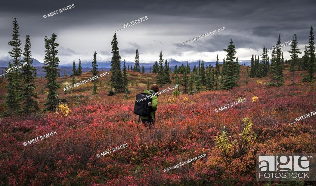 Photo de stock: Asian man hiking near trees in landscape.