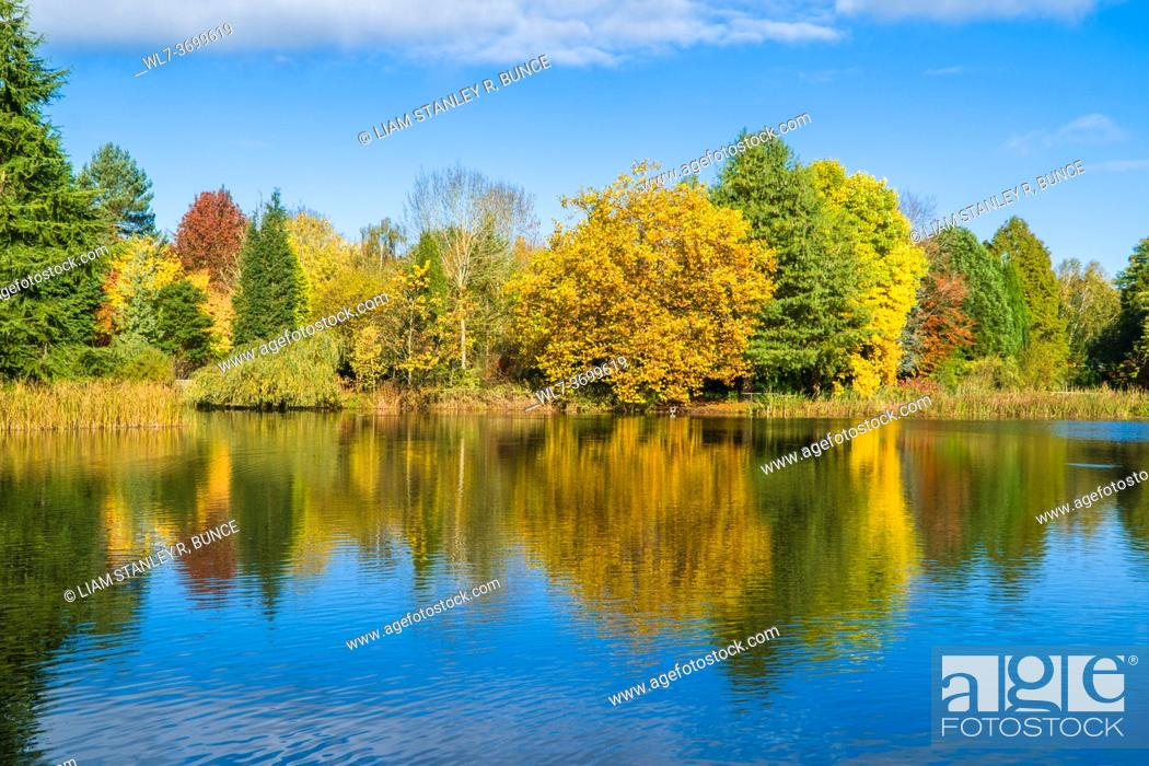 Stock Photo: Autumn colours reflected in the class like surface of a pond. Kidderminster Worcestershire UK. October 2020.