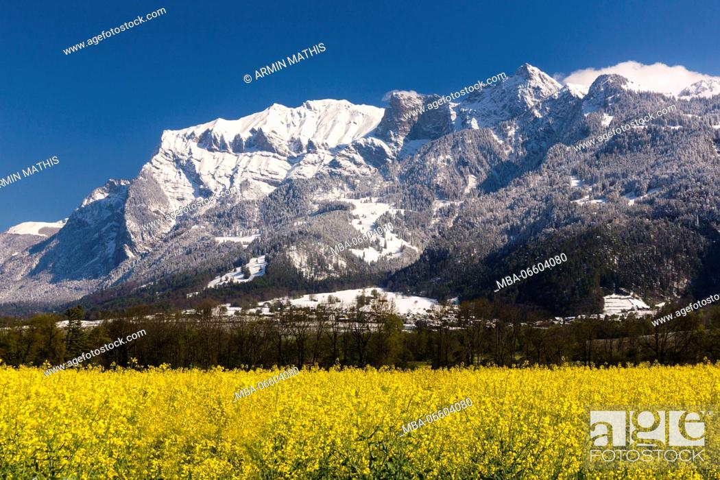 Stock Photo: Blossoming rape field in the 'Bündner Herrschaft' (Signuradi) area, canton of Grisons, Switzerland.