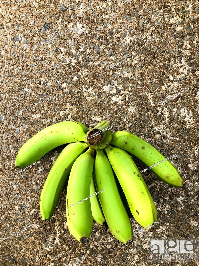 Stock Photo: Green cavendish bananas on the ground.