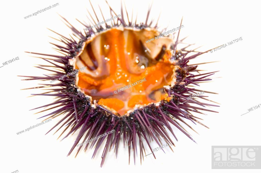 Stock Photo: Sea urchin, close-up.
