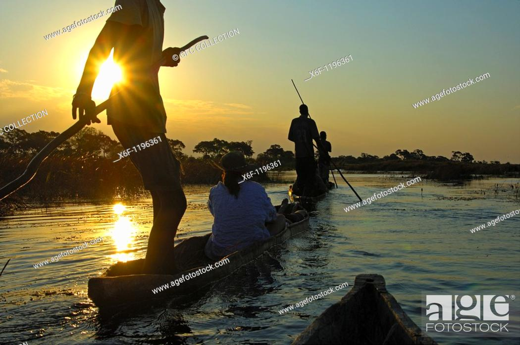 Stock Photo: Boatmen with tourists in mokoro logboats on a sunset excursion in the Okavango Delta, Botswana.