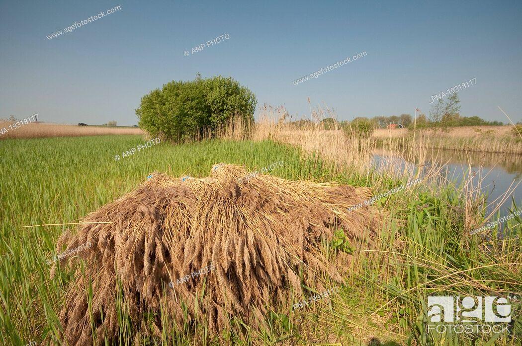 Imagen: Westzanerveld, Zaanstreek, North Holland, The Netherlands, Holland, Europe.