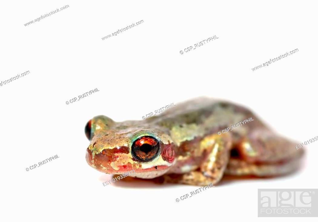 Stock Photo: frog on white.