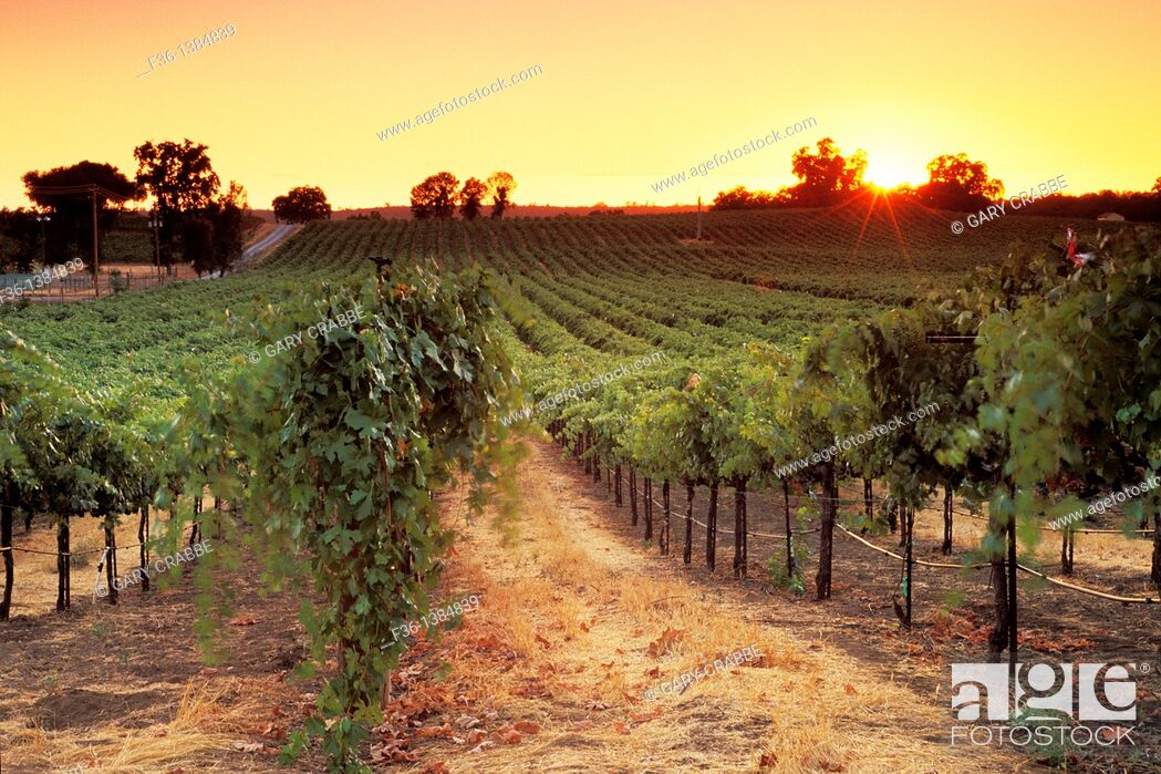 Stock Photo: Sunset over vineyards near Plymouth, Shenandoah Valley, Amador County, California.