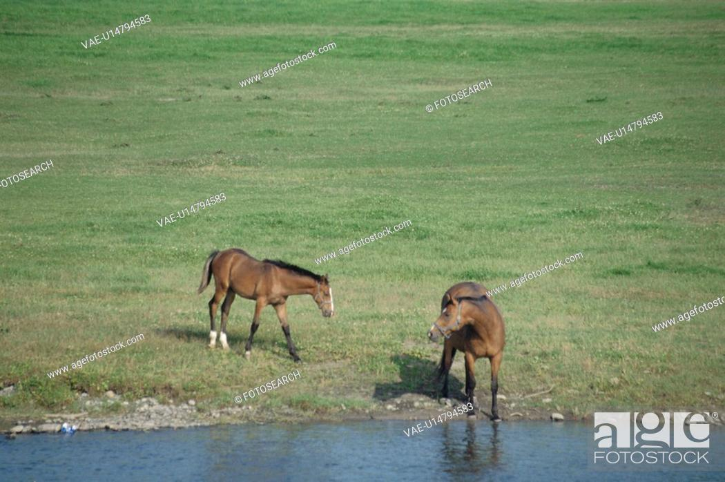 Stock Photo: Two Horses By The River In Hokkaido.