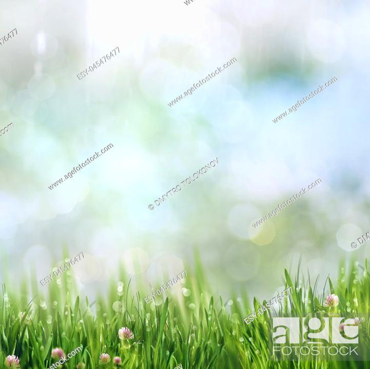 Stock Photo: Beauty summer day on the smokey meadow, environmental backgrounds.