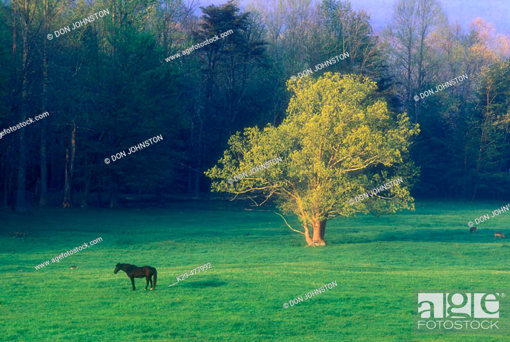 Stock Photo: Pasture in Cades Cove with grazing horse. Great Smoky Mountains NP. Tennessee. USA.