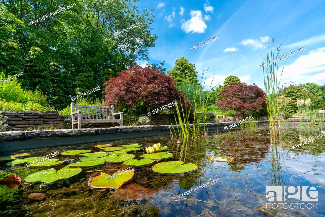 Stock Photo: formal rectangular walled garden pond with water lilies and lily pads and a park bench and red acer in the background.