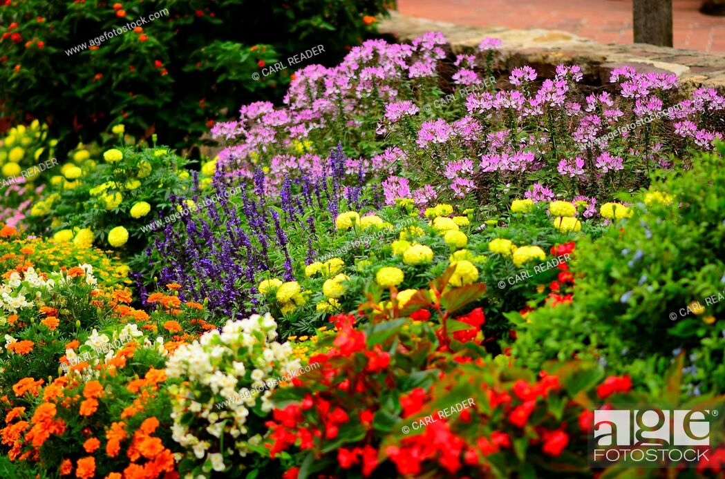 Stock Photo: A many-colored garden in soft-focus, Pennsylvania, USA.