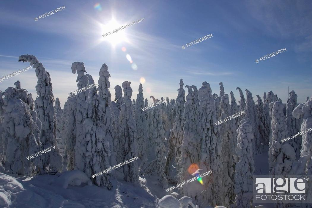 Stock Photo: Blue, Clear Sky, Covering, Day, Dense.