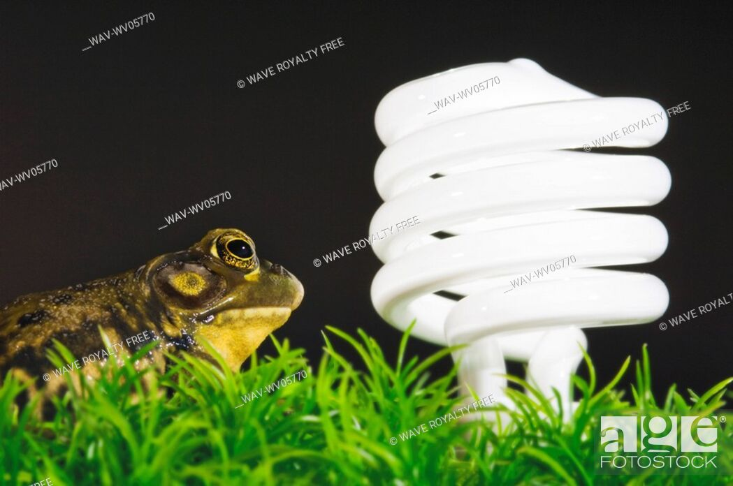 Stock Photo: Energy-saving light bulb inspected by green frog.