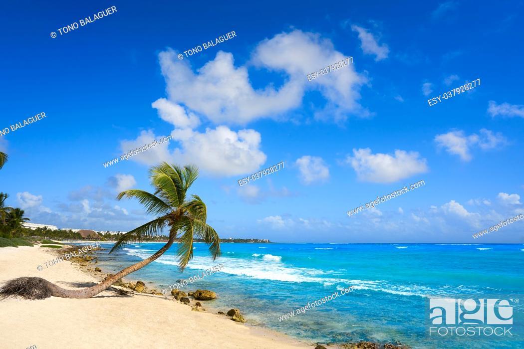 Photo de stock: Akumal coconut palm tree beach in Riviera Maya of Mayan Mexico.