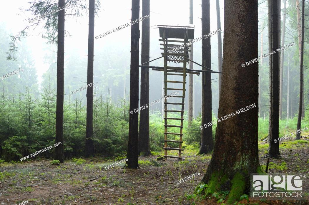 Stock Photo: Close-up of a perch in a forest on a rainy day, Bavaria, Germany.