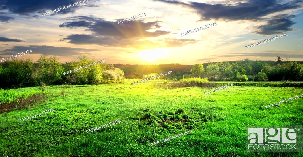 Stock Photo: Meadow of green grass and trees at sunrise.
