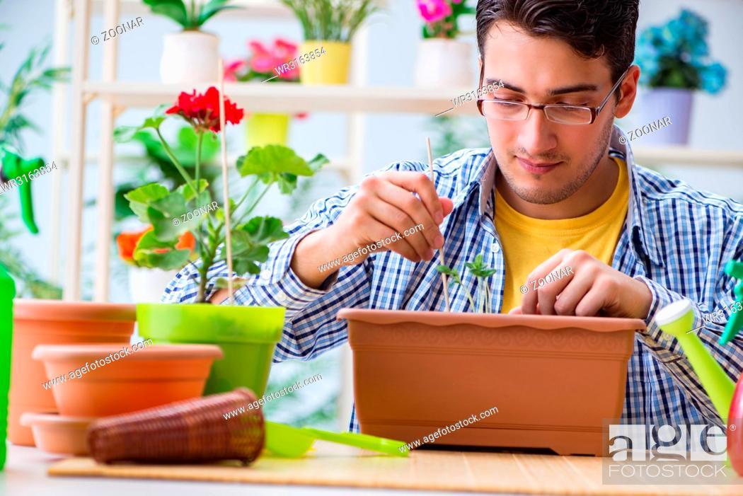 Stock Photo: Young man florist working in a flower shop.