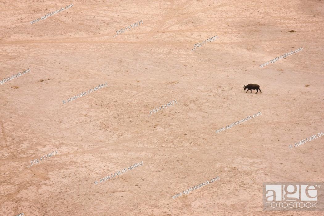 Stock Photo: Amboseli National Park, Kenya, Africa.