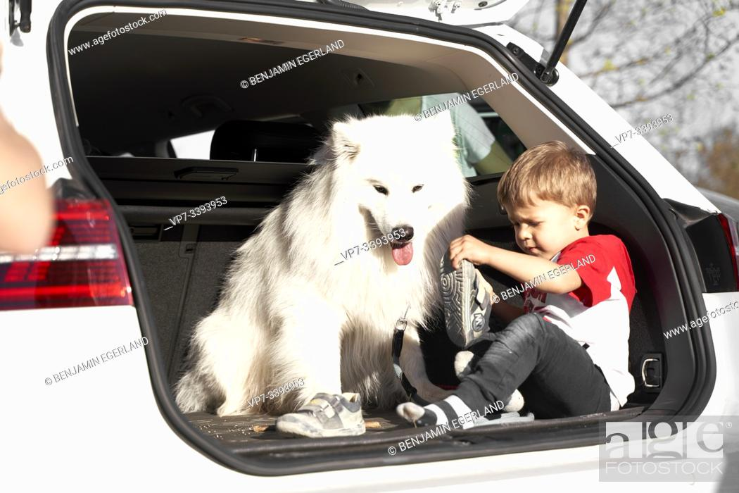 Imagen: toddler child with dog in car boot, undressing shoes.