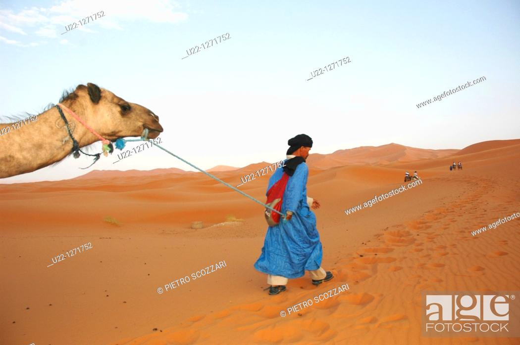 Stock Photo: Merzouga Dunes (Morocco): a camel used for tourists pulled by a Tuareg man in the desert.