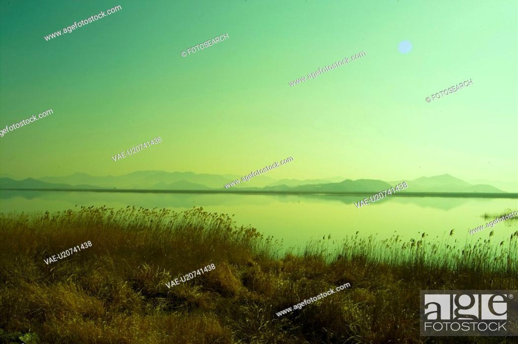 Stock Photo: plants, nature, eulalia, plant, scenery, grass, river.