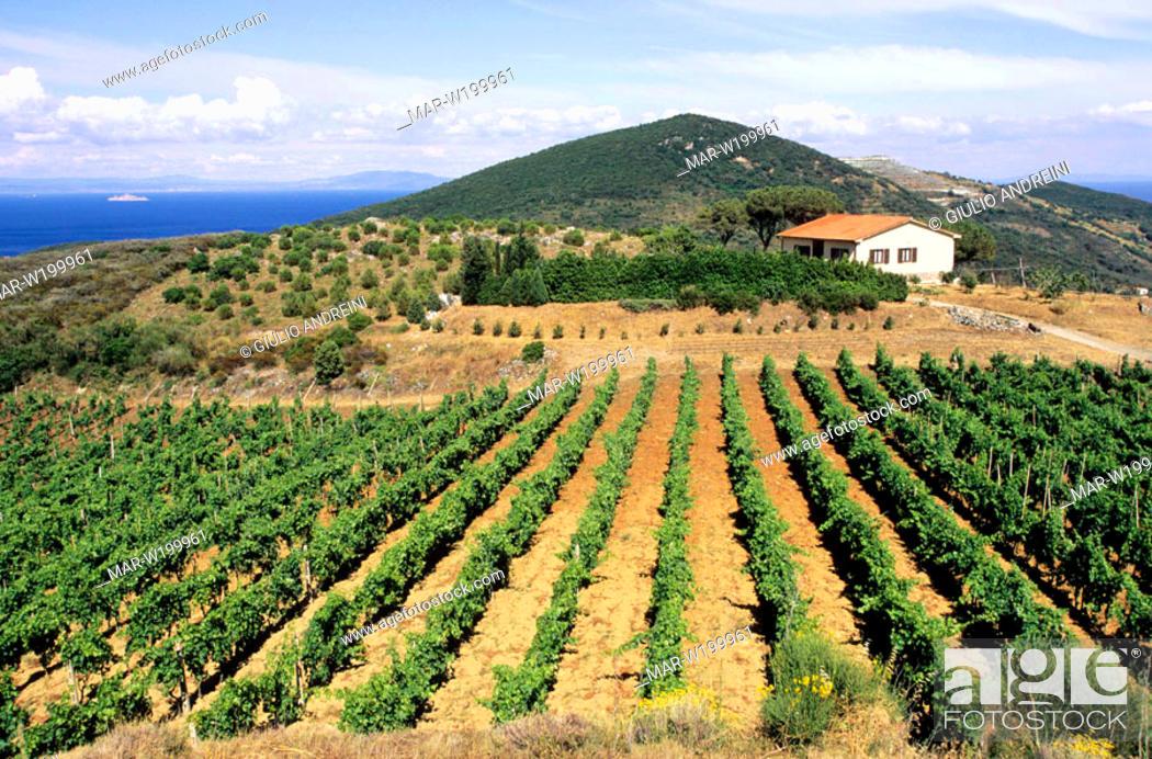 Stock Photo: europe, italy, tuscany, elba island.