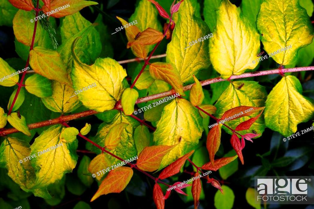 Stock Photo: Leaves.