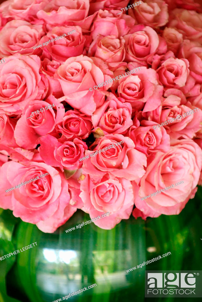 Stock Photo: Pink roses in vase, close-up.