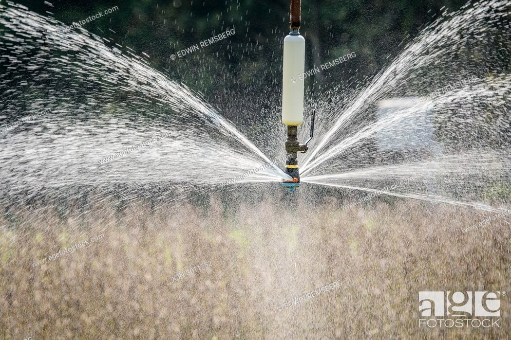 Stock Photo: Water spraying out of sprinkler head of irrigation system as it waters field of soybeans, Tifton, Georgia. USA.