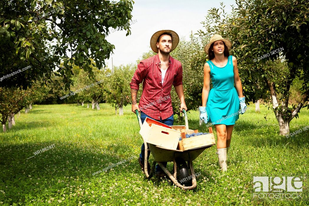 Stock Photo: Young couple with wheelbarrow in orchard.