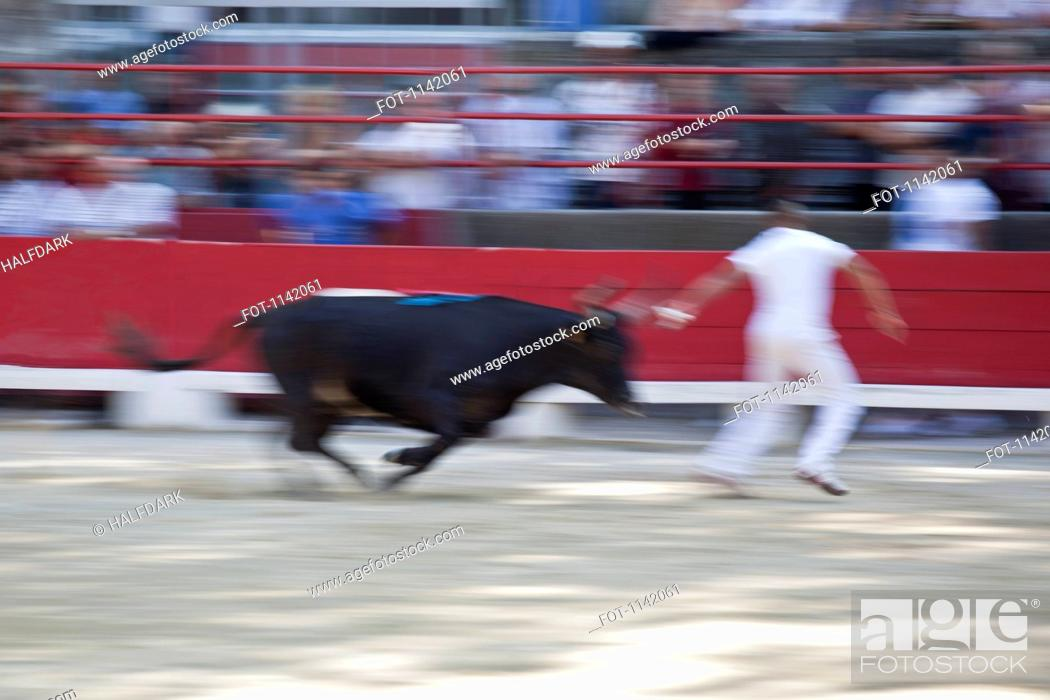Stock Photo: A bull chasing a man in an arena.