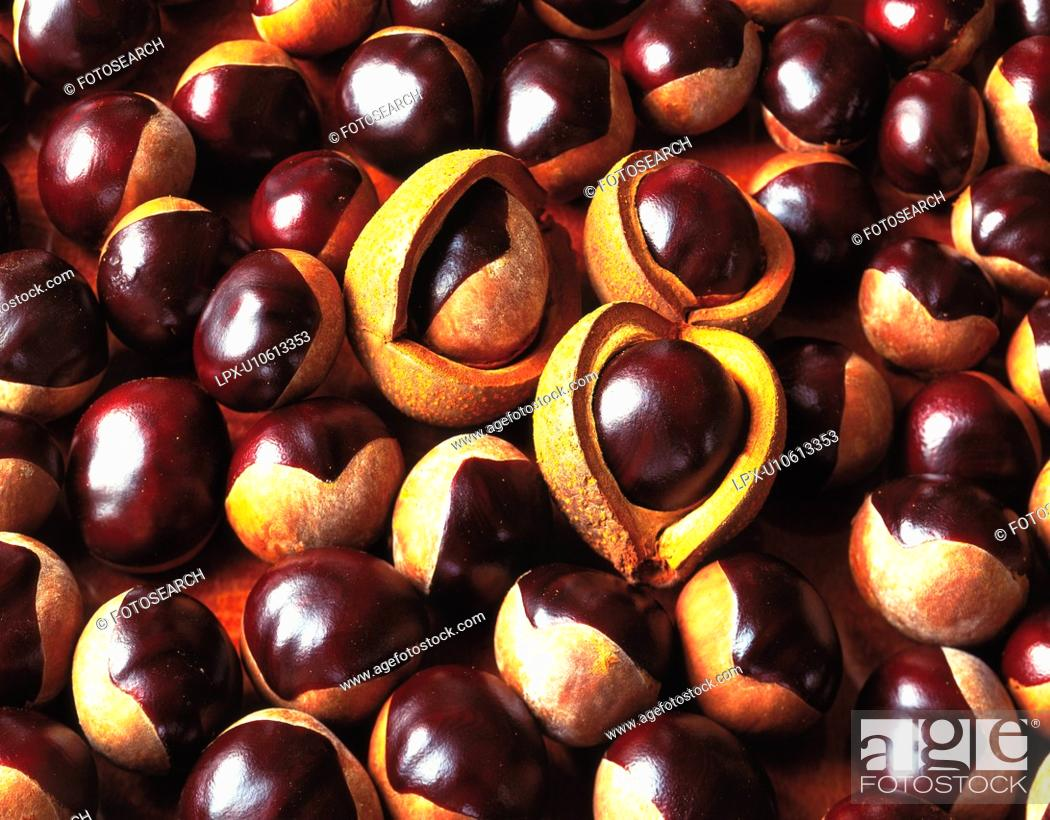 Stock Photo: Horse chestnuts.