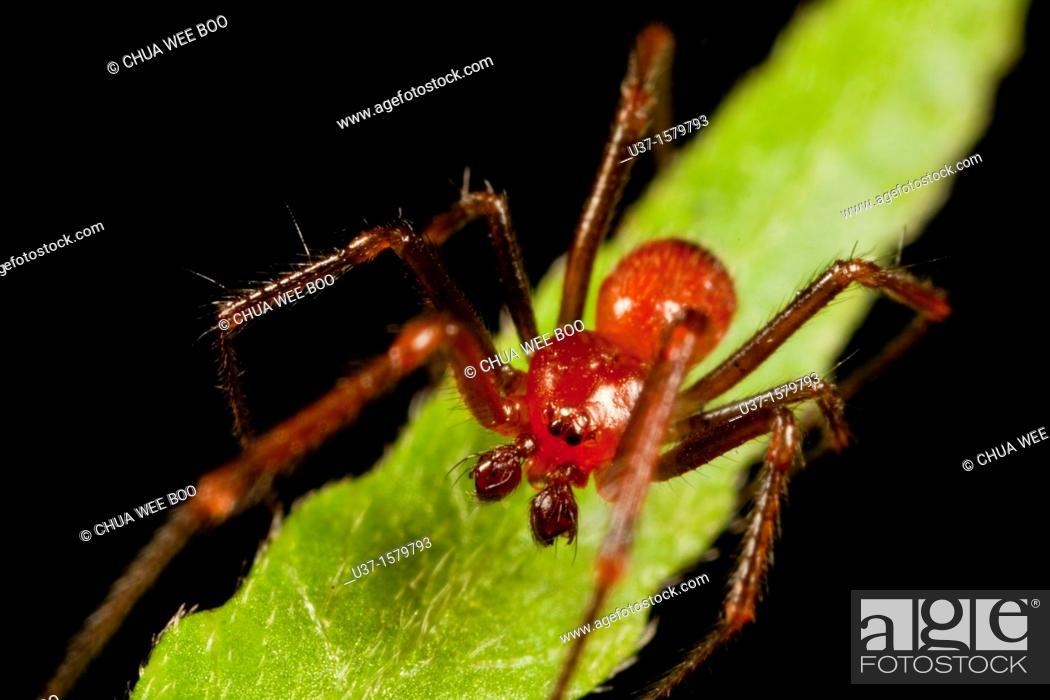 Stock Photo: Huntsman spider.