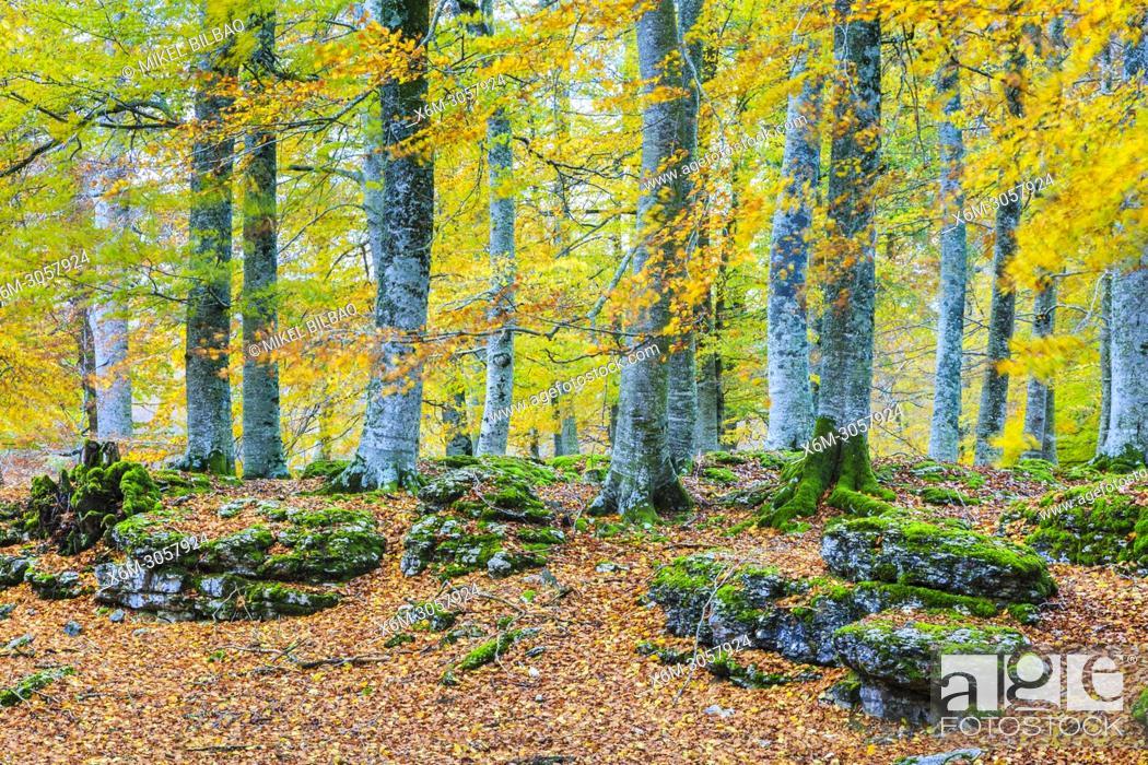 Imagen: Beechwood. Sierra de Urbasa-Andia Natural Park. Navarre, Spain, Europe.
