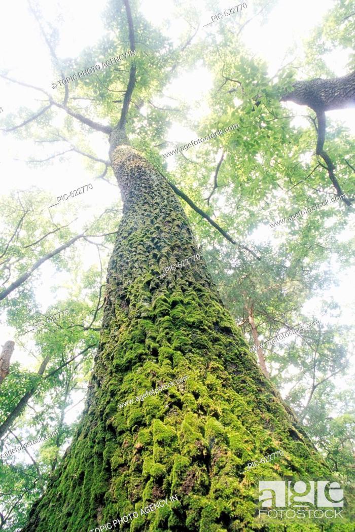 Stock Photo: Mossy Trees.