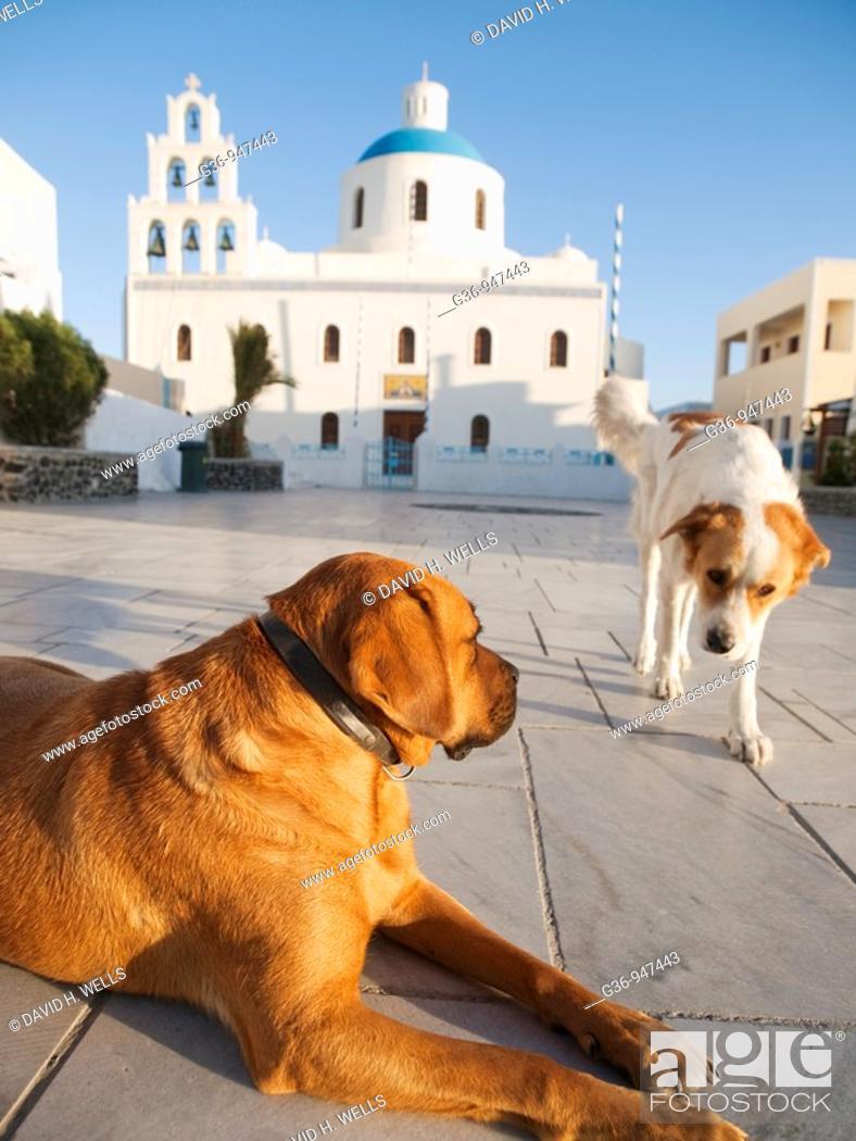 Stock Photo: Dog rests in miain square in Oia, Santorini, Greece.