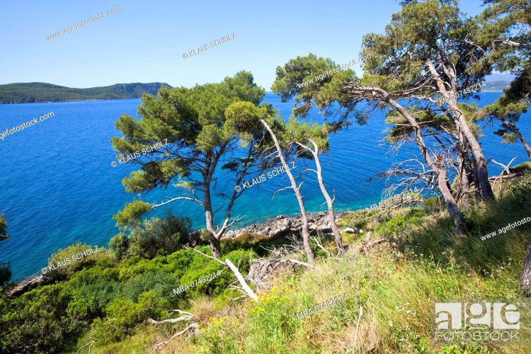 Stock Photo: Aleppo pines off Navarino Bay in Greece.