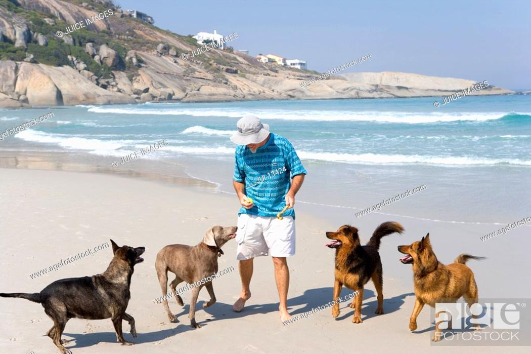 Stock Photo: Man playing with dogs on beach, elevated view.