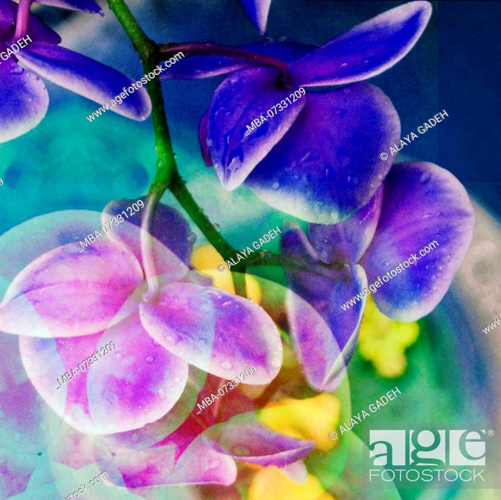 Stock Photo: Photomontage, multiple exposure, flowers, multicolored, detail,.
