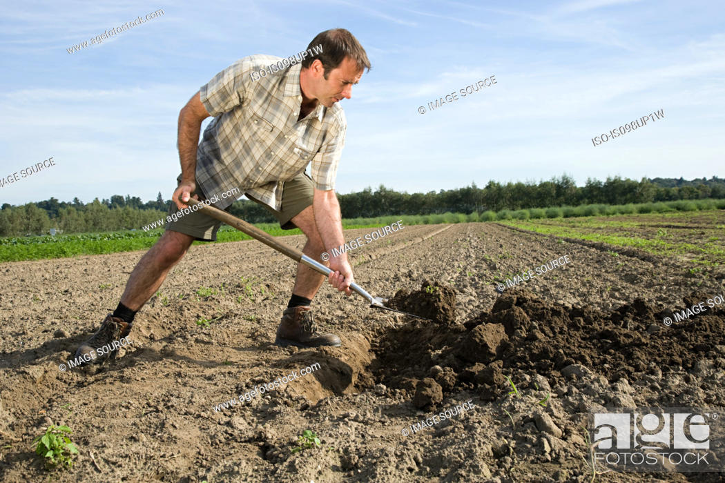 Stock Photo: Mid adult man digging in field.