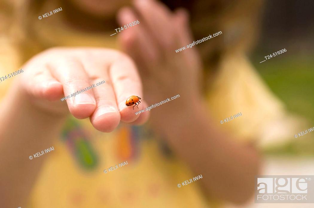 Stock Photo: 3 year old holding ladybug, Flagstaff, Arizona, USA.