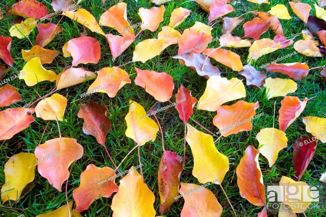 Stock Photo: Colorful autumn leaves of red, yellow, and orange scattered on a green grass background.