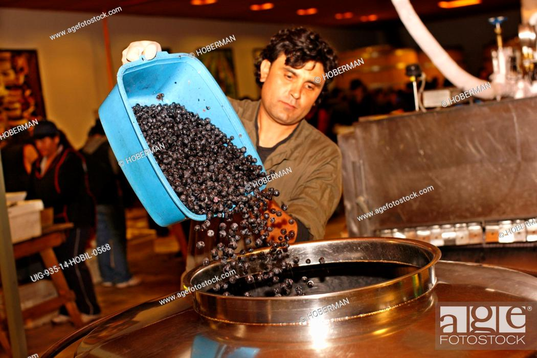 Stock Photo: Pouring Grapes into Fermentation Tank, Chile.