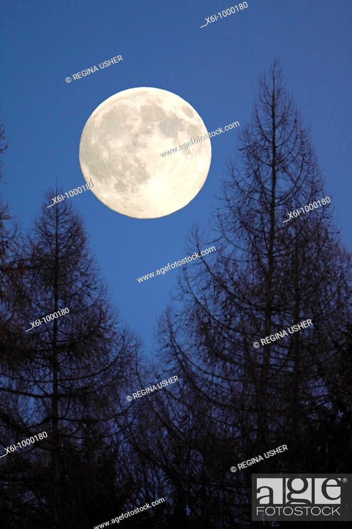 Stock Photo: Full Moon, rising above forest in winter, Germany.