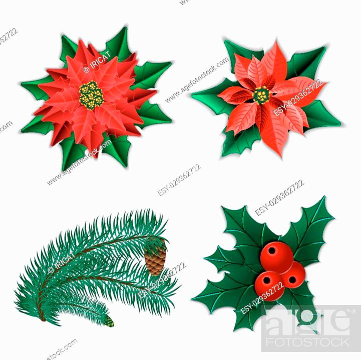 Stock Vector: Set of Christmas decorations. Christmas flower poinsettia and holly and fir-tree branch with cone isolated on white. Vector illustration.