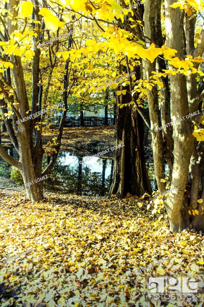Stock Photo: one point, yellow trees. Vigevano, Italy.