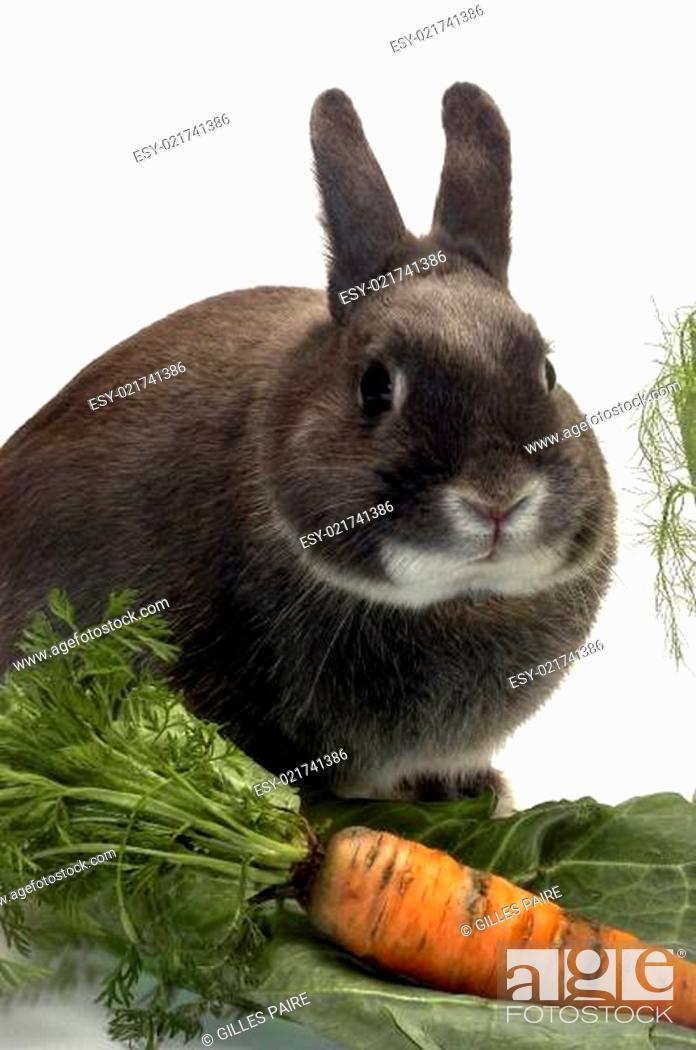 Stock Photo: portrait of a rabbit and his favorite vegetables.
