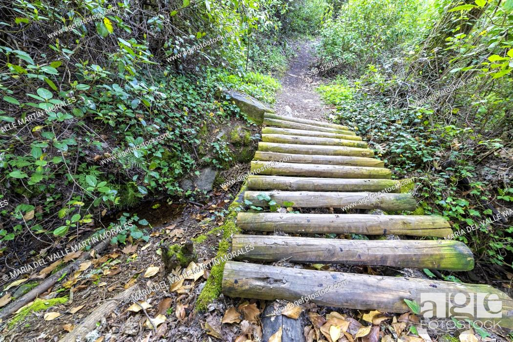 Stock Photo: Wooden walkway at fishermen path. Arenas de San Pedro. Avila. Spain. Europe.